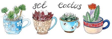 Cactus in una tazza Isolato watercolor Fotografia Stock