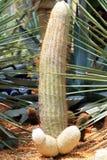 Cactus. Various fresh green cactus plants stock photos