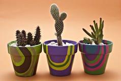 Cactus in vasi Immagini Stock