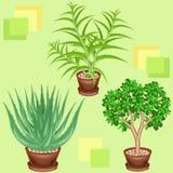 Cactus in vasi su un fondo verde Un modello operato Adatto come carta da parati sopra, come fondo per i prodotti d'imballaggio Cr royalty illustrazione gratis