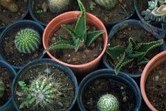 Cactus in vasi Vendita delle piante della casa Fotografie Stock Libere da Diritti