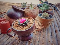Cactus in vaso delle coperture della noce di cocco fotografia stock