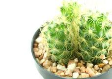 Cactus in vaso di fiore Fotografia Stock Libera da Diritti