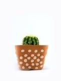 Cactus in vaso di plastica Fotografia Stock