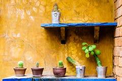 Cactus in vaso nel giardino del cactus Immagini Stock