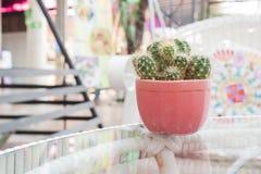 Cactus in vaso sulla tavola in giardino Fotografia Stock Libera da Diritti