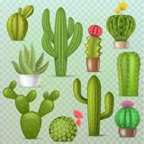 Cactus vector botanical cacti green cactaceous succulent plant botany illustration floral realistic set of cartoon. Exotic flowers isolated on transparent royalty free illustration