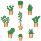 Cactus vector illustration. Hand drawn colorful cactus set. Hand drawn colorful set of cactuses Royalty Free Stock Photos