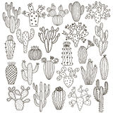 Cactus vector illustrations. Hand drawn cactus plants set Stock Photos