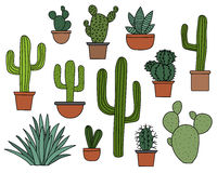 Cactus vector set, hand drawn collection of various succulents and cacti Stock Image