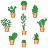 Cactus vectorillustratie Hand getrokken kleurrijke cactusreeks Royalty-vrije Stock Foto's