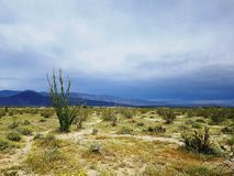 Cactus vegetation in Borego desert in California Royalty Free Stock Photos