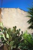 Cactus verde fotografia stock libera da diritti