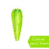 Cactus verde Cactus isolato su fondo bianco Illustrazione del quadro televisivo di un cactus Fotografie Stock