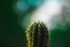 Cactus verde claro con las agujas anaranjadas grandes fotos de archivo libres de regalías
