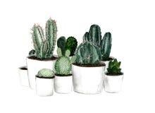 Cactus verde dell'acquerello messo in vasi bianchi Fotografia Stock Libera da Diritti