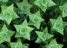 Cactus verde di spikey Immagine Stock Libera da Diritti