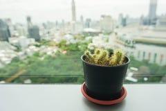 Cactus verde en el pequeño pote colocado en el escritorio de oficina fotografía de archivo