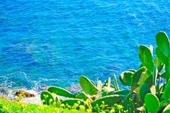 Cactus verde sopra il mare del blu di Alghero Fotografia Stock Libera da Diritti