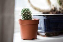 Cactus verde, succulents en el alféizar con el fondo suave ligero Tarjeta de felicitación de la primavera o del verano Plantas ca imagen de archivo libre de regalías