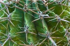 Cactus verde tropical del fondo con los puntos grandes foto de archivo libre de regalías