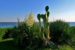 Cactus verde y flores blancas cerca del mar imagenes de archivo