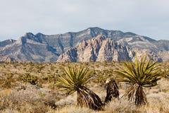Cactus verdi in priorità alta Immagine Stock