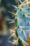 Cactus verdoso espinoso que coloca el salvaje imagen de archivo
