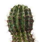 Cactus vert Photos libres de droits