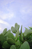 Cactus vert Image libre de droits