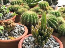 Cactus vert avec l'épine et la fleur image stock