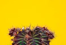 Cactus vert de plan rapproché sur le fond jaune Configuration de mode Art Gallery Minimal Image stock