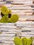 Cactus vert sur les pierres blanches de mur Photographie stock libre de droits