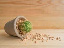 Cactus vertido Imagenes de archivo