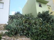 Cactus verts dans la ville image stock