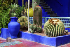 Cactus. View of some cactus on Majorelle Garden in Marrakech, Morocco Stock Photo