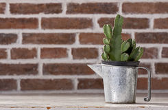 Cactus in vintage zinc pitchers Royalty Free Stock Photos