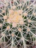 Cactus (visión cercana) Foto de archivo libre de regalías