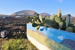 Cactus and volcano on Lanzarote, Canary Islands, Spain. Royalty Free Stock Photography