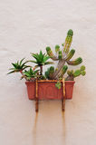 Cactus on wall Royalty Free Stock Images