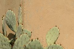Cactus and Wall. Prickly Pear Cactus Against a Wall in Horizontal Format Royalty Free Stock Photos