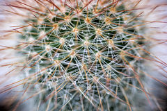 Cactus with water drops Royalty Free Stock Images