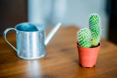 Cactus and watering tool Stock Photos
