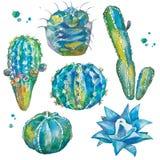 Cactus in waterverfstijl die wordt geplaatst Royalty-vrije Stock Foto's