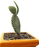 Cactus waving Stock Image