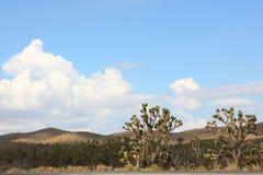 Cactus in westelijke verenigde standbeelden Stock Foto