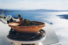 Cactus. White architecture of Oia village on Santorini island, Greece Royalty Free Stock Photo