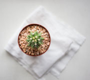 Cactus on white floor Stock Photography