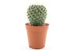 A Cactus. Stock Photos