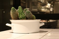 Cactus in White Pot. On the Table Royalty Free Stock Image